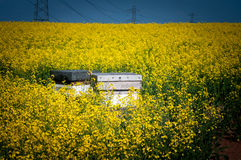 Beehives in rape field Royalty Free Stock Photography
