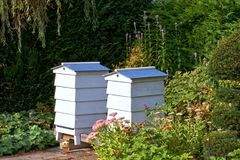 Beehives by the River Thames. Beehives in a residential garden by the River Thames in Marlow close to Merlow lock Royalty Free Stock Photos