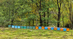 Beehives. Row of beehives near a forest during the early autumn Royalty Free Stock Photo
