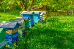 Beehives. Several beehives in different colors in line stock image