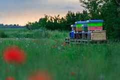 Beehives Sit in a Poppy Field as the Sun Sets Behind an Oncoming Storm. royalty free stock image