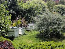 Beehives. Situated in a sheltered spot by trees stock images