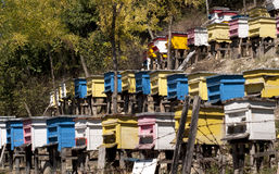 Beehives on slope. Wooden colored beehives on mountain forest slope royalty free stock image
