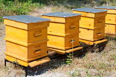 Beehives royalty free stock photo