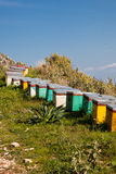 Beehives in summer Stock Photography