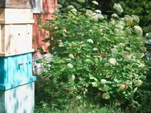 Beehives in summer. Stack of the beehives in a hot summer day, outdoors shot stock photography