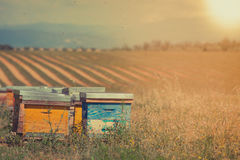 Beehives on the sunflower field in Provence, France. Filtered shot royalty free stock images