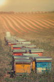Beehives on the sunflower field in Provence, France Royalty Free Stock Images