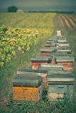 Beehives on the sunflower field in Provence, France Royalty Free Stock Photo