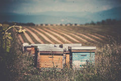 Beehives on the sunflower field in Provence, France. Filtered shot royalty free stock image
