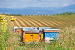 Beehives on the sunflower field in Provence, France. Horizontal shot stock photography