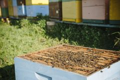 Beehives. With swarm of bees royalty free stock photo