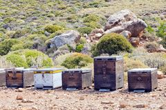 Beehives for thyme honey in rural dry field in Crete, Greece Royalty Free Stock Photos
