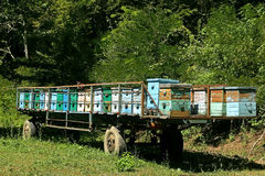 Beehives in the trailer. Row of old colorful wooden beehives in the trailer forest royalty free stock photography