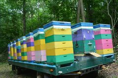 Beehives transporting trailer in the forest royalty free stock photo