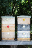 Beehives Stock Photos