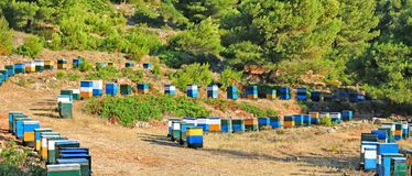Beehives in a valley. Near the forest in Lefkada, Greece royalty free stock photo