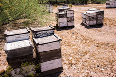 Beehives at Work Stock Photo