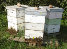 Beehives1 stock image