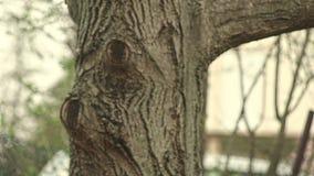 Beeinflussen unter den Baum in der Natur stock video