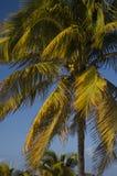 Beeinflussende Palme Stockbilder
