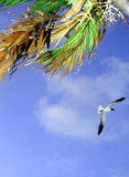 Beeinflussende Palmen Stockfoto
