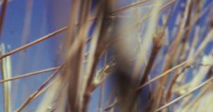 Beeinflussende Wüstenpflanzen Abschluss herauf Anlagen fangen das Beeinflussen in die Brise auf stock video
