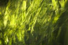 Beeinflussendes Gras Lizenzfreie Stockbilder