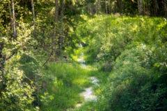 Beek in bos stock afbeeldingen