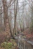 Beek en bomen Stock Fotografie