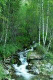 Beek in het bos Stock Afbeeldingen