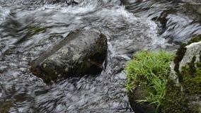 Beek met stenen stock footage