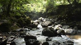 Beek onder bos stock videobeelden