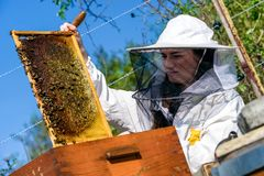 Honeycomb and beekeeper stock images