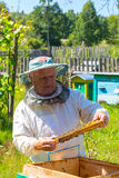 Beekeeper в действии Стоковые Фото