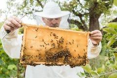 Beekeeper держа сот с пчелами в его руках Стоковые Изображения