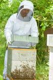 Beekeeper держа крапивницу крышки Стоковое Изображение