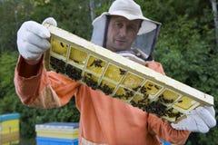 Beekeeper держа сот с пчелами меда Стоковые Фото