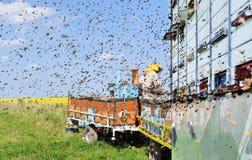 Beekeeper и его передвижные ульи Стоковые Изображения
