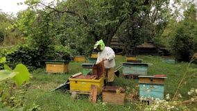 Beekeeper и пасека сток-видео