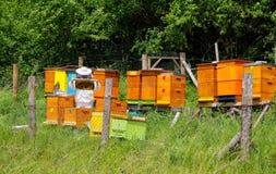 Beekeeper и ульи Стоковая Фотография