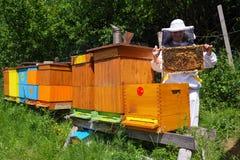 Beekeeper и ульи Стоковые Изображения RF