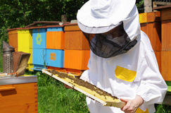 Beekeeper и ульи Стоковое фото RF