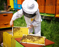 Beekeeper и ульи Стоковое Изображение RF