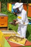 Beekeeper и ульи Стоковые Изображения