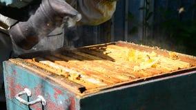 Beekeeper курит дым пчел - управляет прочь пчелами акции видеоматериалы
