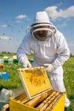 Beekeeper на работе во время времени весны защищенного костюмом Стоковая Фотография RF