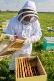 Beekeeper на работе во время времени весны защищенного костюмом Стоковое Изображение