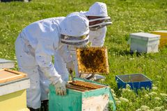 Beekeeper на работе во время времени весны защищенного костюмом Стоковые Фотографии RF