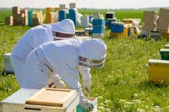 Beekeeper на работе во время времени весны защищенного костюмом Стоковые Изображения